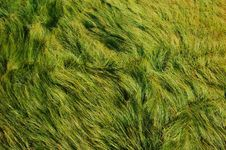 Free Lush Green Grass Background Royalty Free Stock Images - 20405069