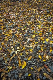 Free Forest Floor Stock Images - 20405684