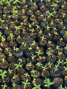 Free Baby Plants Stock Image - 20406581