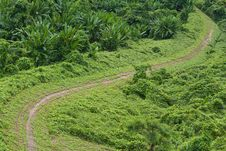 Green Grass Road Stock Photography