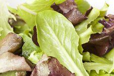 Free A Fresh Green Salad Royalty Free Stock Photo - 20408555