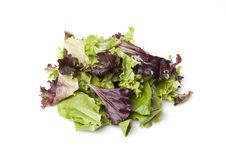Free A Fresh Green Salad Royalty Free Stock Photos - 20408588