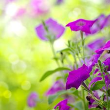 Free Beautiful Blue Flowers Stock Images - 20410014