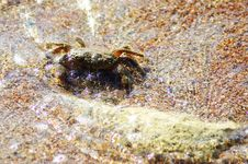 Shore Sand And Crab In The Water. Stock Photography