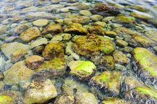 Shore Stones. Stock Photography