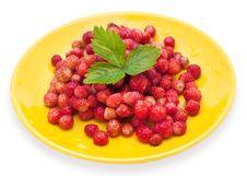 Free Strawberry Stock Image - 20410931