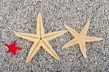 Free Starfish Of Sand Royalty Free Stock Photography - 20411527