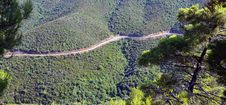 Free Snake Forest Road Royalty Free Stock Images - 20412079