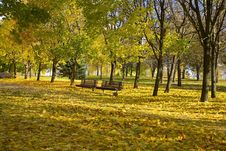 Free Leaf Fall In Autumn Park Royalty Free Stock Images - 20413529