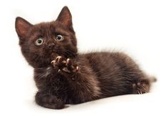 Free Little Kitten On White Stock Photos - 20413693