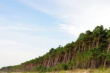 Free Lots Of Pine Trees Stock Image - 20415171