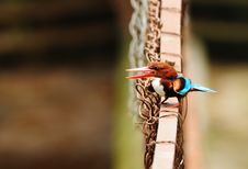 Free White-throated Kingfisher Stock Images - 20415624
