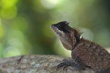 Free Lizard Stock Image - 20415751