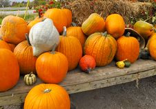 Free Pumpkins Royalty Free Stock Image - 20415876