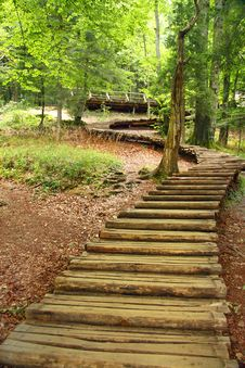 Free A Stairway Made Of Tree Stock Photos - 20417893