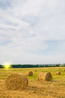 Free Field Full Of Bales. Stock Photos - 20418153