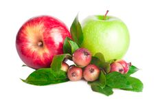 Free Apples Fruit Stock Images - 20418844