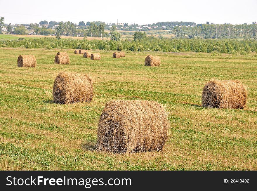 Rolls of hay in a field.