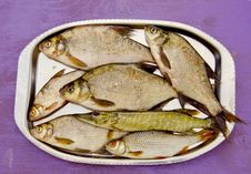 Fresh Fishes In The Tray Stock Photo