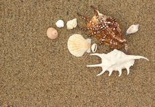 Free Sea Shells With Sand Stock Photos - 20422033