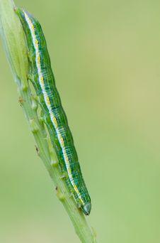Free Caterpillar Stock Photos - 20422253