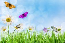 Free Flowers Stock Photos - 20423703