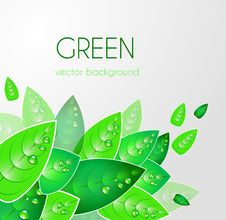 Free Abstract Natural Background Royalty Free Stock Photography - 20425887
