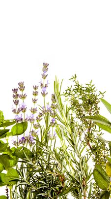 Free Herbs Border On White Royalty Free Stock Images - 20426249