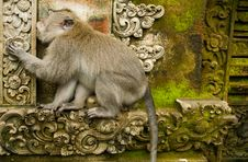 Free Monkey Forest Stock Images - 20426364
