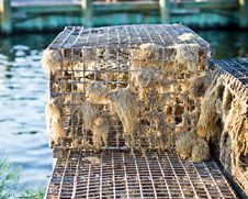 Free Fishermans Trap Royalty Free Stock Photos - 20426758