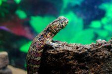 Free Lizard Stock Photo - 20429410