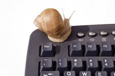 Free Snail On Computer Keyboard Stock Image - 20430731