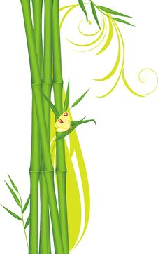 Free Green Bamboo With Butterfly Stock Images - 20431664