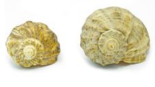 Free Two Shells Stock Photography - 20432262
