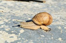 Free On A Concrete Slab Was Crawling Snail Stock Photos - 20433243