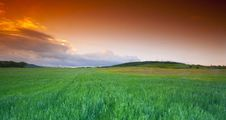 Free Wheatfield At Sunset Royalty Free Stock Photography - 20435327