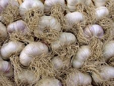 Free Garlic Bulbs Stock Images - 20435474