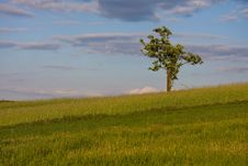 Free Tree On A Spring Field Royalty Free Stock Photo - 20435545