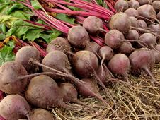 Free Beetroots Harvest Royalty Free Stock Photography - 20435717