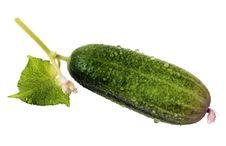 Free Green Cucumber Royalty Free Stock Photos - 20439568