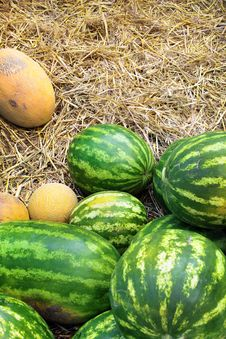 Free Watermelon And Cantaloupe Royalty Free Stock Photos - 20439788