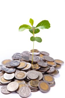 Tree Growing On Coin Stock Image