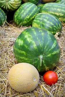 Watermelons, Tomatoe And Cantaloupe Royalty Free Stock Photos