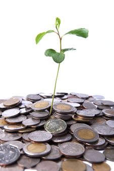 Free Tree Growing On Coin Stock Photo - 20439850