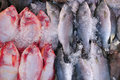 Free Fresh Fish Stock Image - 20443491