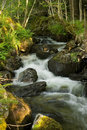 Free Waterfall In Forest Stock Photos - 20445753