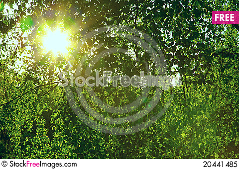 Free Sun Through A Green Leaves Royalty Free Stock Photo - 20441485