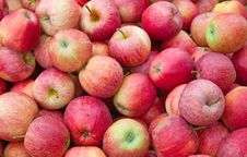 Free Red Apples Royalty Free Stock Photos - 20441398