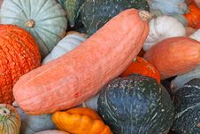 Colorful Pumpkins Stock Image