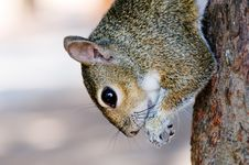 Free Squirrel Eating On The Tree Stock Image - 20442481